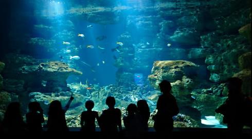 Aquarium-de-trocadero